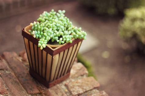 topfpflanzen garten topfpflanzen und die notwendige fr 252 hlingspflege