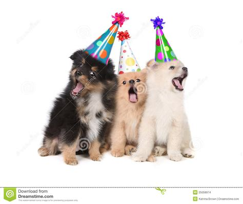 puppy singing happy birthday puppies singing happy birthday wearing hats stock photo image of puppy