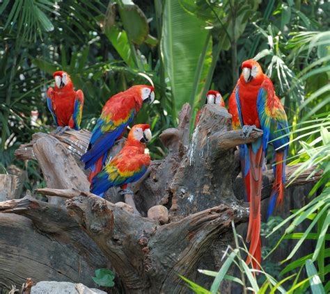 mexicanlove bird parrot facts habits habitat species