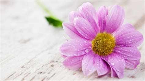 best wallpaper hd 1080p free download 1366 215 768 flower