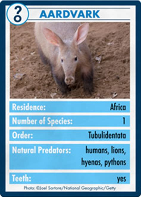 anteaters  aardvarks  nose  insect extermination anteaters  aardvarks howstuffworks