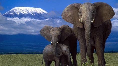 abstract elephant wallpaper african elephant wallpaper download photos hd wallpapers