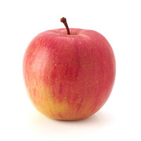 apple australia fuji apple each anticos grocer