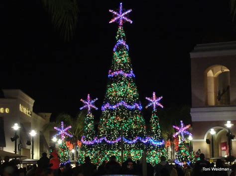 28 best christmas tree shop sarasota fl christmas