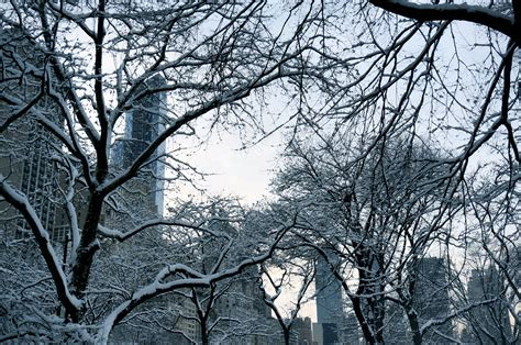 manhattan new york happiness is snow capped trees in