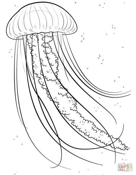 coloring pages jellyfish image gallery jellyfish coloring pages