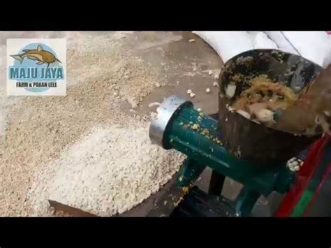 Jual Terpal Kolam Lele Cirebon tambak lele cara budidaya ikan lele yang