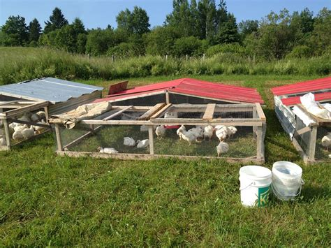 how chicken tractors can increase egg production and get image gallery joel salatin pastured chicken