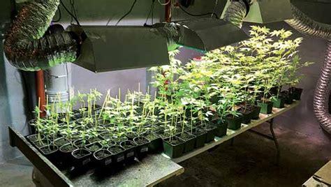 City Of Ta Arrest Records Search Warrant Leads To Marijuana Grow Operation Www Elizabethton