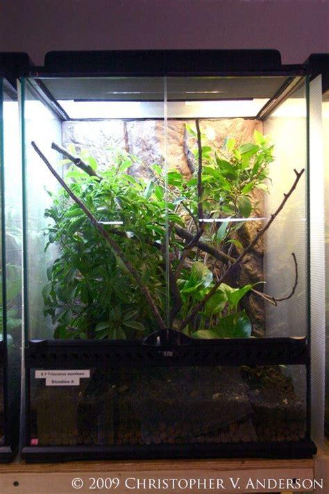 images  vivariums  terrariums  pinterest