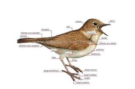 L Oiseau by Morphologie De L Oiseau S Oiseaux Animaux