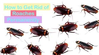 home remedies to roaches home remedies to get rid of roaches quickly how
