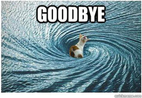 Goodbye Cat Meme - goodbye cat