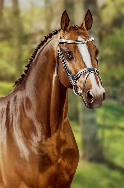 imagenes artisticas de caballos cuadros pinturas oleos fotograf 237 as de pinturas de caballos