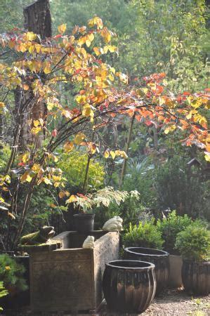 Jardinerie Val D Oise 3612 by Jardinerie De Curiosit 233 S Taffin Montmorency Frankrig