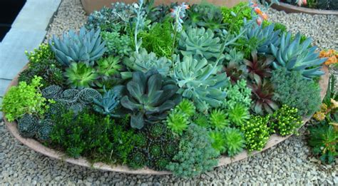 container gardening advice wanted the green - Sedum Container Gardens