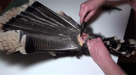 turkey fan and beard mounting kit turkey taxidermy mount a turkey fan and beard bone