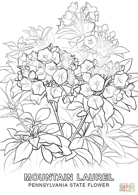 pennsylvania state flower coloring page free printable