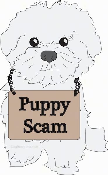 puppy scams stories of getting scammed the 16