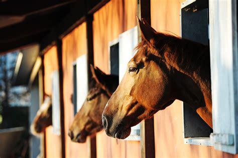 stall pferde gespickt als lebendiger k 246 der das leid der kamikaze taube