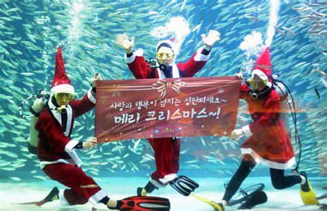 fish   merry christmas   happy  year  korea times