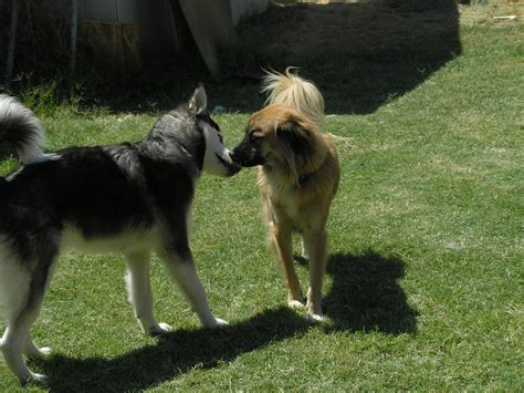 socializing dogs today socializing your rescued