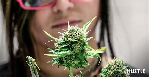 plants at home the quot grow your own marijuana at home quot industry is booming