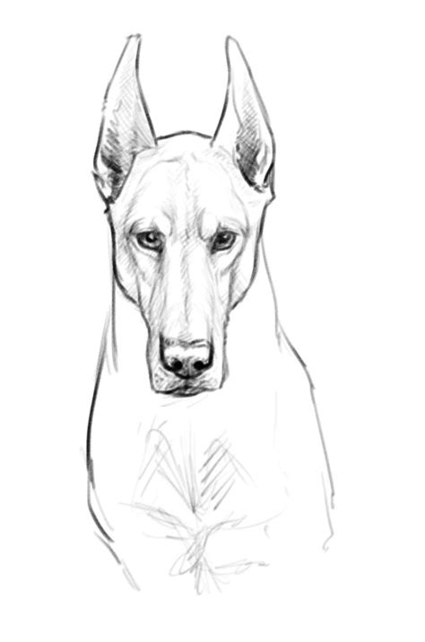 doberman face 2389742 by firequill on deviantart