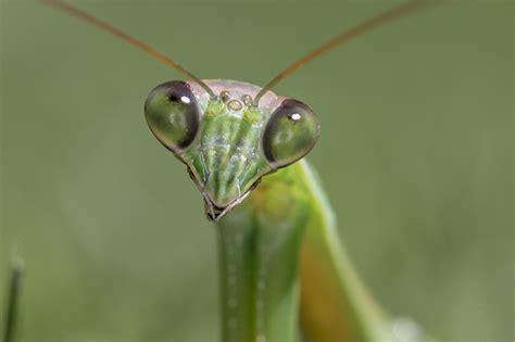 Praying Mantis L by Quotes About Praying Mantis Quotesgram