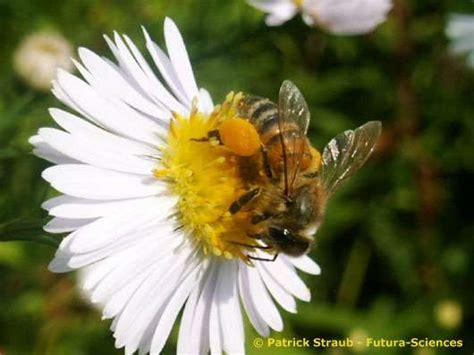 abeille assurances si鑒e social l abeille dossier