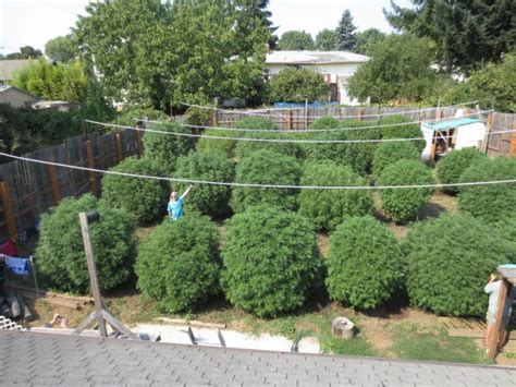 Backyard Vape Co How To Grow Outside In Any Climate Top Tips