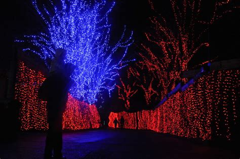 oregon zoo lights zoolights aims for record setting annual attendance at