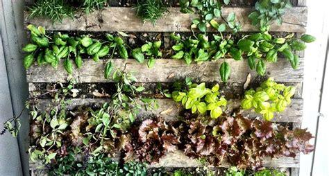 piante per fioriere fioriere fai da te vasi vasi balcone