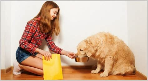best food for golden retriever puppy food analysis for golden retriever dogs