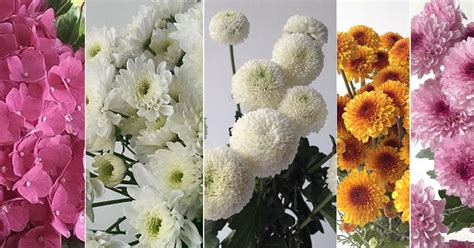 Jual Bibit Bunga Potong anda mencari bunga potong bali vintage florist