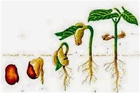 gudang tugas herru perkembangbiakan tumbuhan  hewan