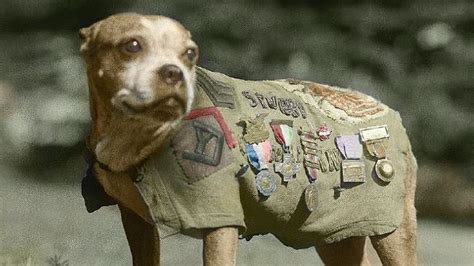 Is Sgt Stubby Real Stubby The Spycatcher And The Animals Of World War I The Mercury