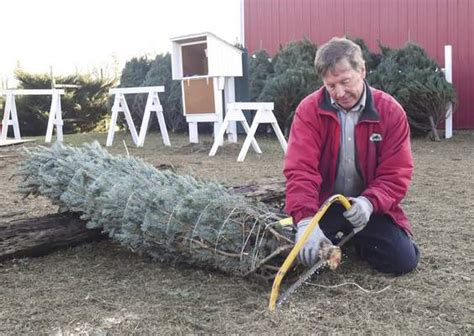 christmas tree farms fading out local the journal gazette