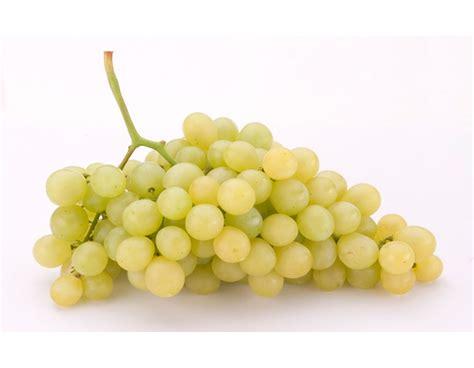 uvas blancas imagenes comprar uva moscatel blanca del vinalop 243 fruta de la sarga