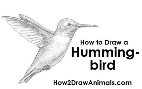 how to draw a hummingbird on a flower how to draw a hummingbird