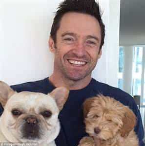 allegra for dogs hugh jackman admits that he skypes his dogs while away daily mail