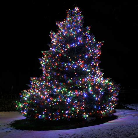 Outdoor Lighted Christmas Trees Style All Home Design Ideas Tree Lights