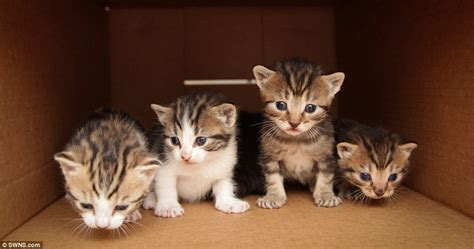 free eye near me kittens looking for home after being dumped in cardboard