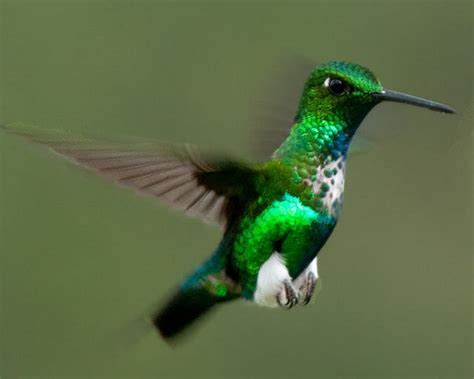 imagenes increibles de colibries colibr 237 es magia en el aire video naturaleza curiosa