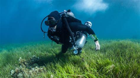 padi dive courses padi scuba diver course balkysub padi cdc scuba diving