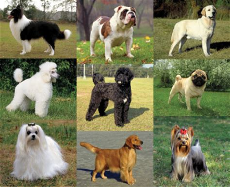 choosing the best dog breed for your family and children how to choose the best breed of cat or dog for your family