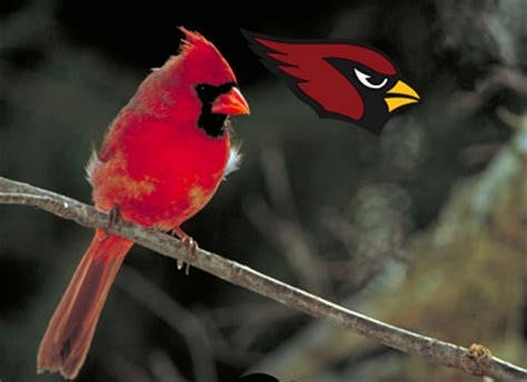 what birds are nfl teams named after audubon