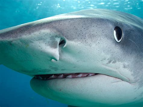 sharks are color blind study