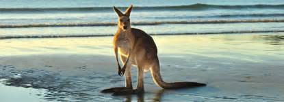 In Australia The Top 10 Things To Do In Australia Viator