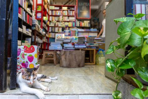 airbnb hanoi 6 purr fect airbnb stays for animal lovers
